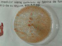 Bacteris Anammox